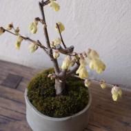榊麻美植物03